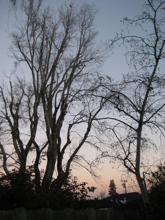 Winter morning in my back yard.