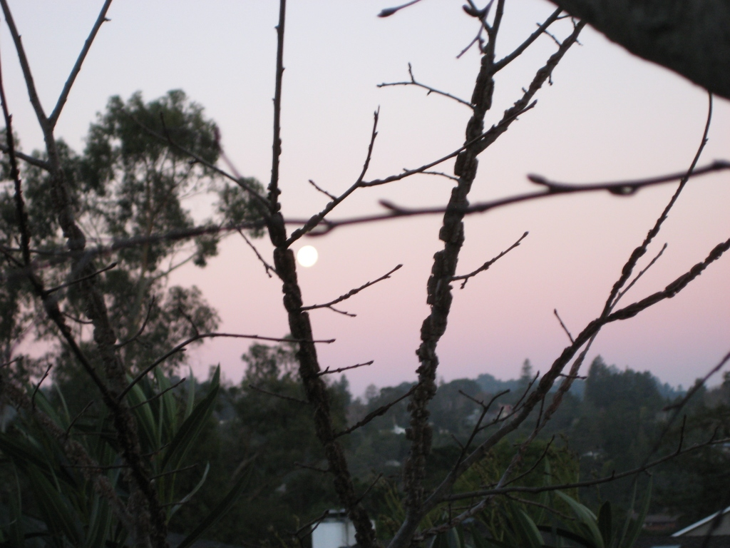 2014 - Morning Moon in the Back Yard (San Mateo)