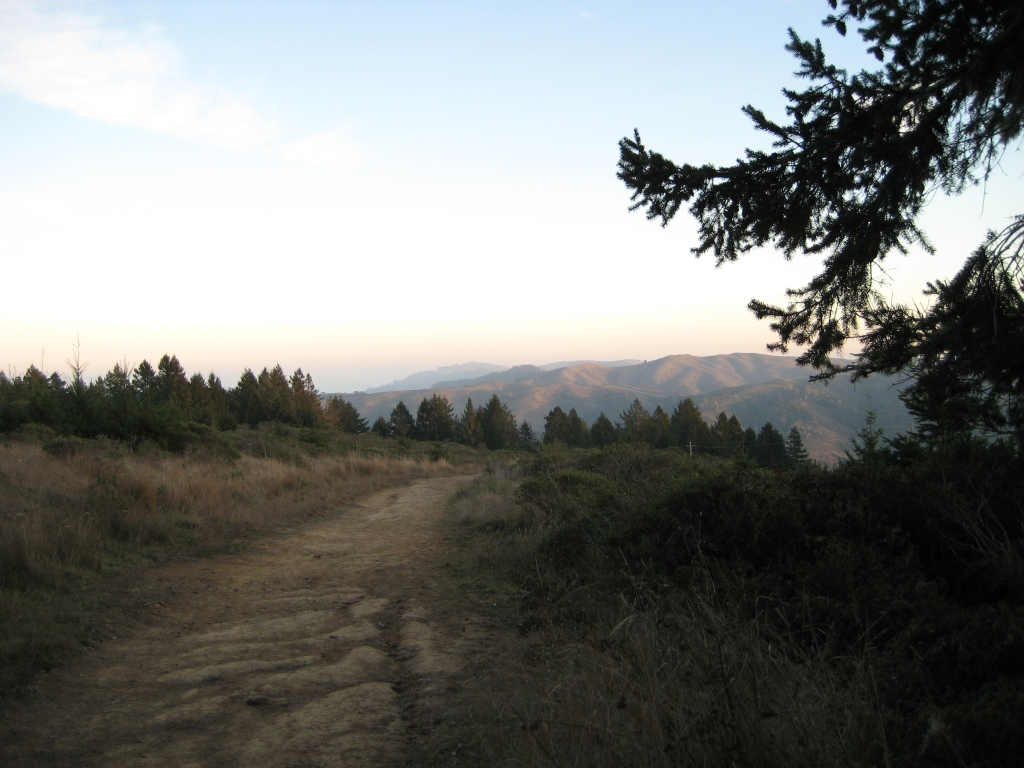 The Dipsea Trail at Dusk