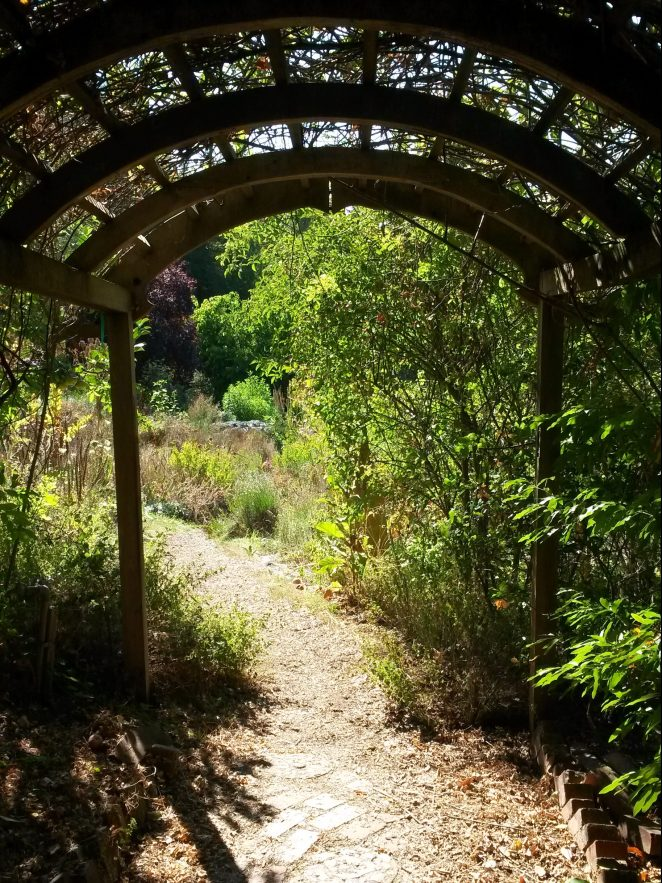 Through the arbor