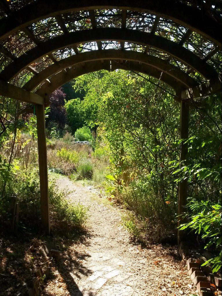 Through the arbor