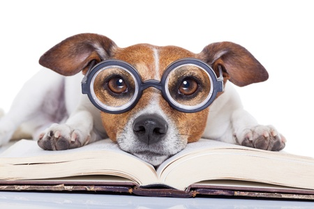 Dog with glasses resting on book